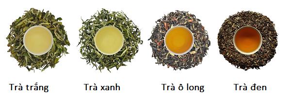 Có 3 loại trà phổ biến được dùng để làm trà sữa