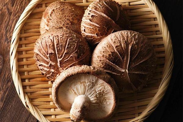 nấm hương giúp bạn giảm cân