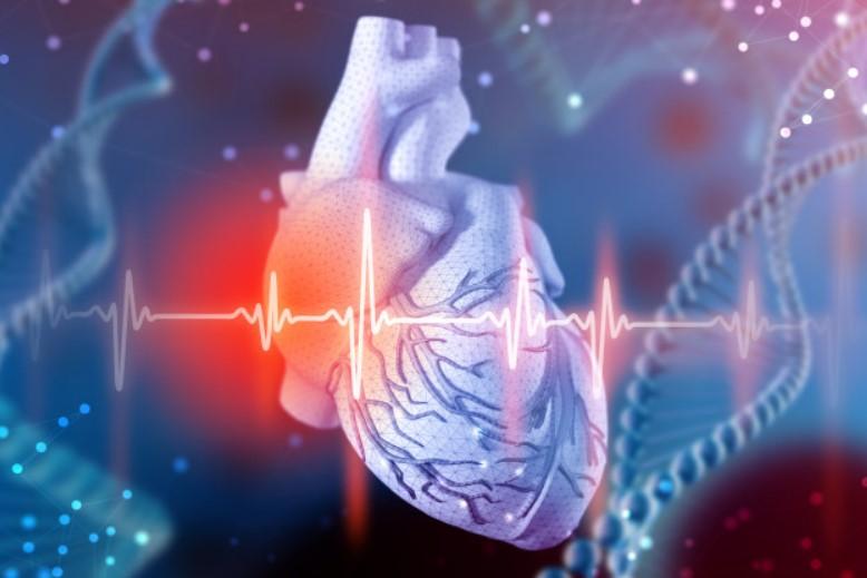 Giúp tăng sức khỏe tim mạch