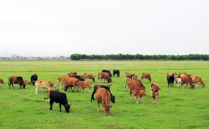 Chọn lựa thực phẩm tươi sống ở các trang trại được nuôi tốt